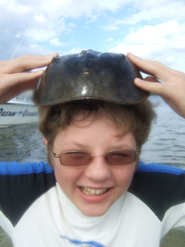 Seth having fun with a horseshoe crab.
