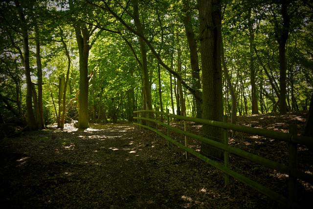The well trodden path