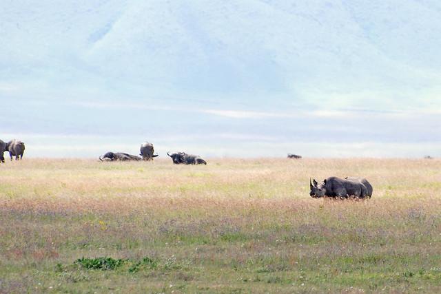 Ngorongoro_2012 05 30_2721