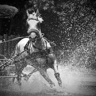 Paardenspektakel Beekbergen 2012 Foto S Gemaakt Met Nikon Flickr