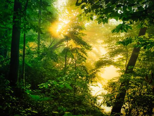 transition hope lost edge boundary fog obscure river chattahoochee dawn sunrise park discoveratl weloveatl exlporegeorgia atlantatrails sonyalpha 4xn discoveratlanta bank iphone