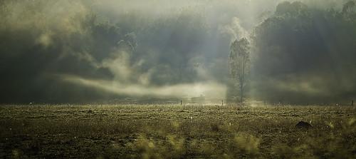 fog sunrise geotagged pentax australia queensland ppg contrejour k5 lightroom carlzeiss zk primelens pentaxphotogallery justpentax makroplanart2100