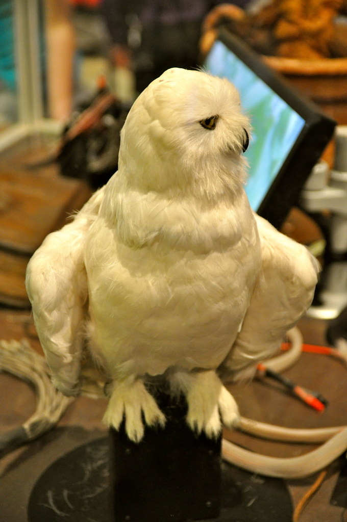 Hedwig | The Making of Harry Potter. Warner Brothers Studio … | Flickr