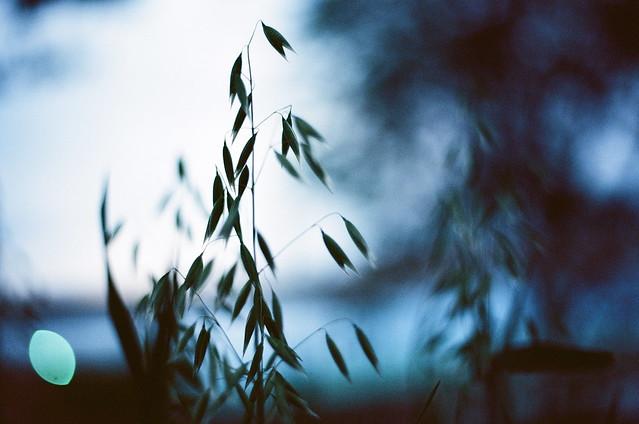 NIGHTTIME GRASSES