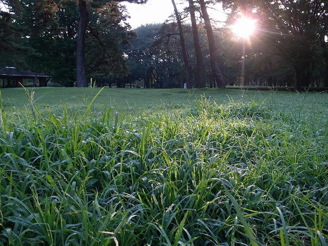 <p>d)伸びてる草には朝露が・・・</p>