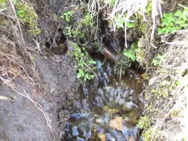 1068 Video of water flowing at High Meadow Springs
