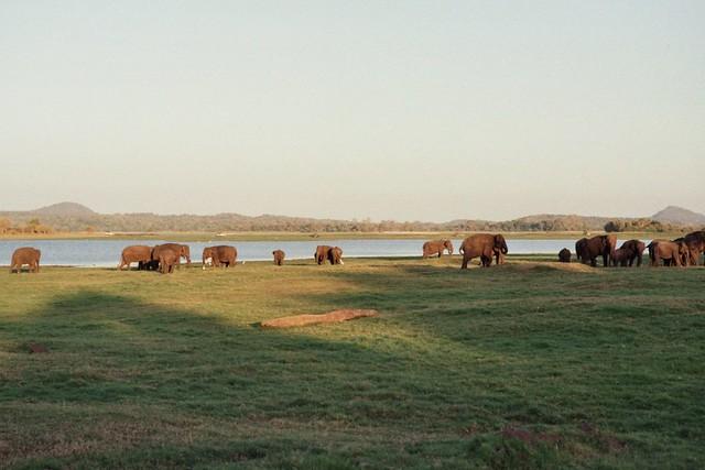 Minneriya National Park, Sri Lanka 643806-27-26A-PfDF43