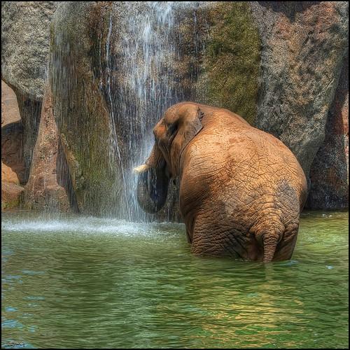 naturaleza elephant nature geotagged golden nikon natura parc gettyimages elefante valència paísvalencià bioparc specialtouch quimg quimgranell joaquimgranell afcastelló obresdart gettyimagesiberiaq2 instantsidetalls