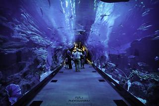 Dubai Aquarium -  M.A.J Photography | by M.A.J Photography