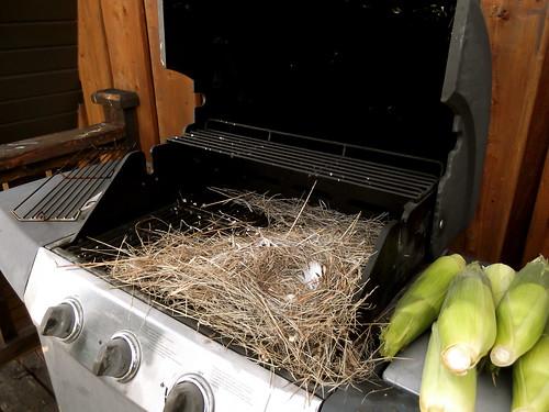 BBQ Bird Nest | by KTilleman