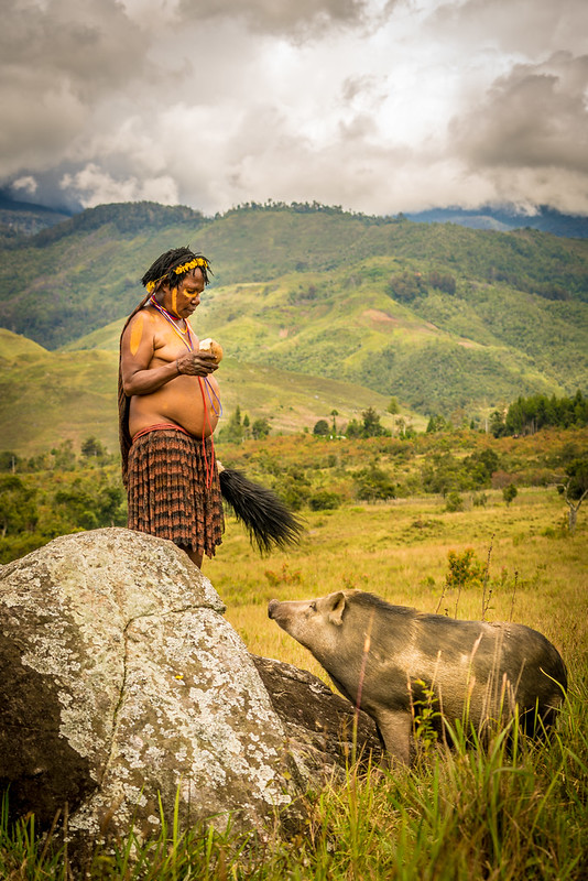 Woman, Land and Pig