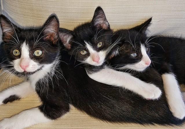 half of 1st foster kitten group