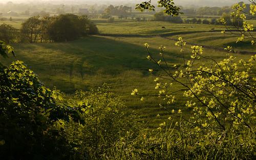 trees grass landscape countryside cows quote farm may lancashire explore fields eveninglight longridge ribblevalley johnsmithspark lancashirelassphotos suebristo