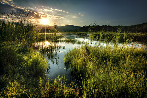 sunset summer plants sun lake 3 plant nature water set canon vermont day mark iii 5d eden stowe hdr mkiii mk3