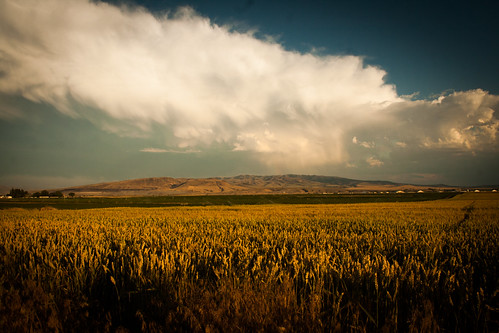 pictures summer sun mountains nature clouds canon photography evening photo wheat farming july bluesky images farmland idaho thunderstorm pocatello eosdigitalrebelxti gemstate mygearandme folpetimages ©2003~©2014folpetphotography folpetphotography folpet