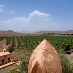 Omani Date Orchards