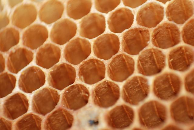 Beehive/La Colmena