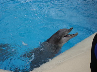 Dolphin 2of3 | by tolomea