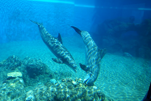 Siegfried & Roy's Secret Garden and Dolphin Habitat | by L. Richard Martin, Jr.