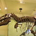 New York – Tyrannosaurus Rex, naštestí už jen v Muzeu of Natural History, foto: Luděk Wellner