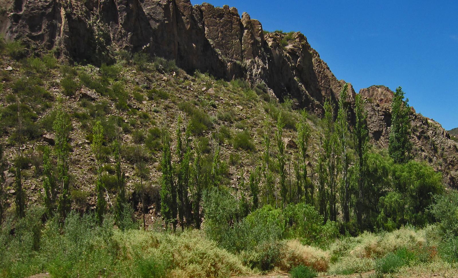 Mendoza 614