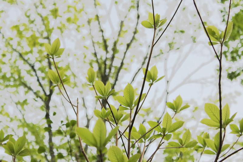 20120520_巻機山_0023