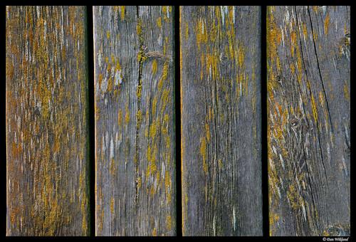 old yellow wooden moss sweden jetty sverige d200 scandinavia plank planks dalsland 2011 tisselskog