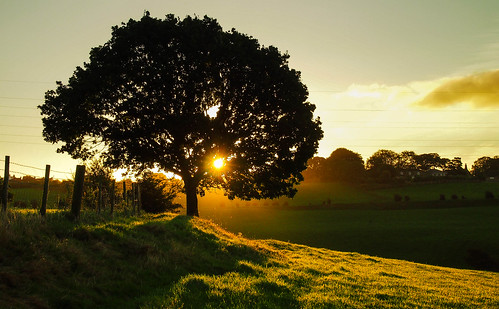 england tree nature sunshine sunrise fence yorkshire natureza grassbank bewiahn