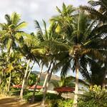 Nukubati palms