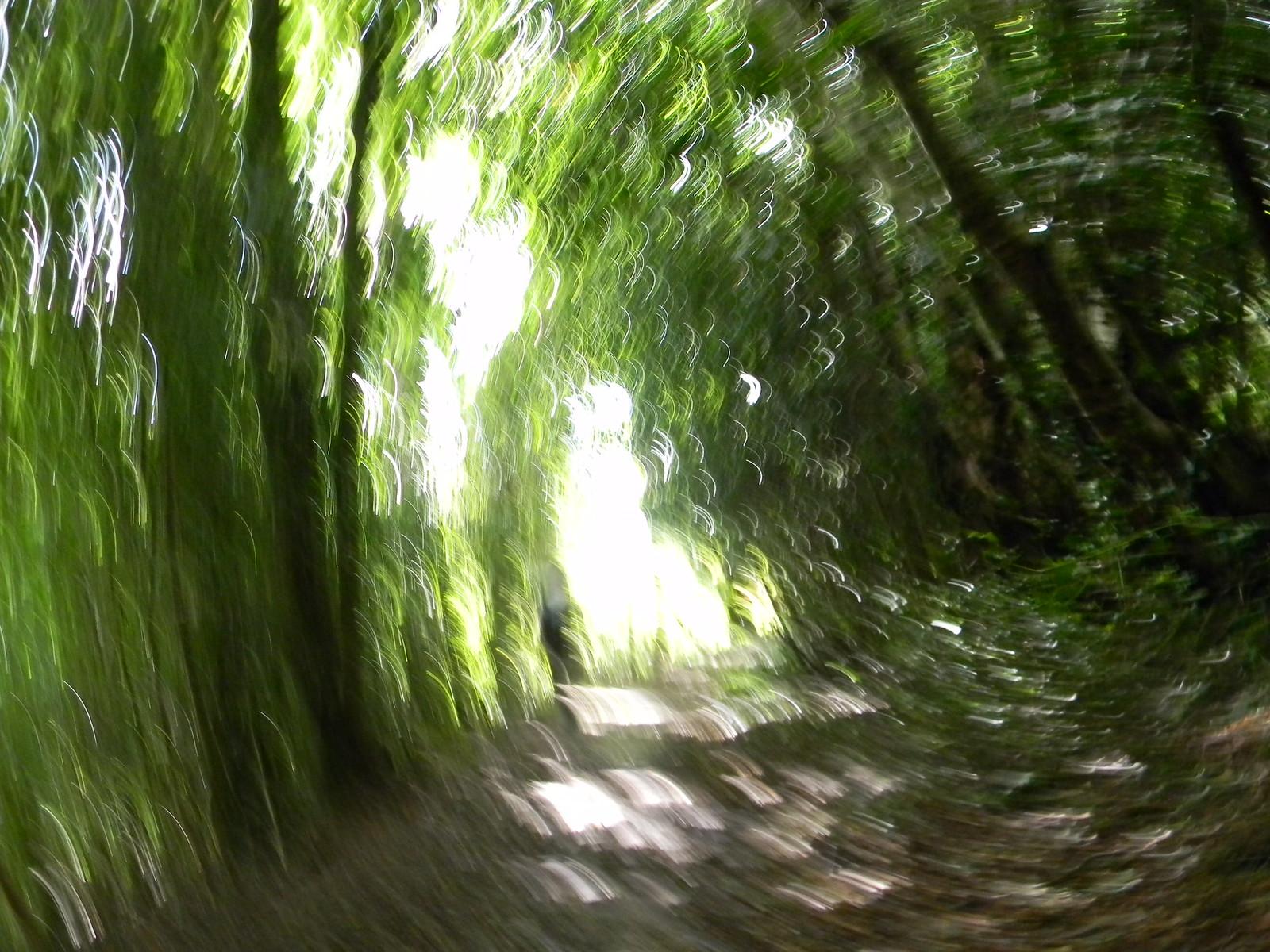 "Shady Bridleway My camera was having an ""impressionist"" day. Haslemere Circular"
