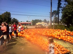 Pumpkin Patch 10