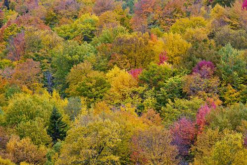 usa maine bethel sundayriver fall autumn red yellow orange trees
