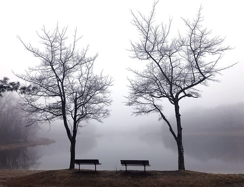 nature weather iphone apple tree trees sky fog plymouth lakewinfield ct
