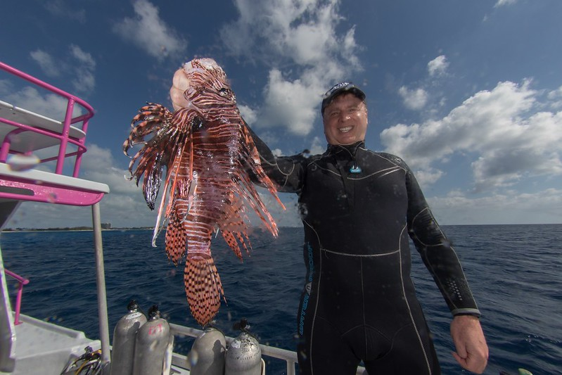lionfish-22