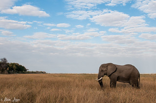 Bull Ellie Landscape | by Photography by Brian Lauer