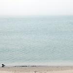海霧、砂浜、カモメ [礼文島 / 浜中]