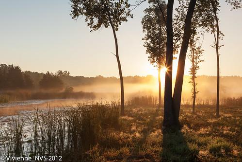 mist fog sunrise illinois pond preserves lakecounty foggyscenes halfdayforestpreserve lcfpd halfdaypond
