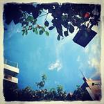なんかこう、勝手に秋めいた色使いになりやがって…。きー。#sky #イマソラ #cloud #tree #green #asasora