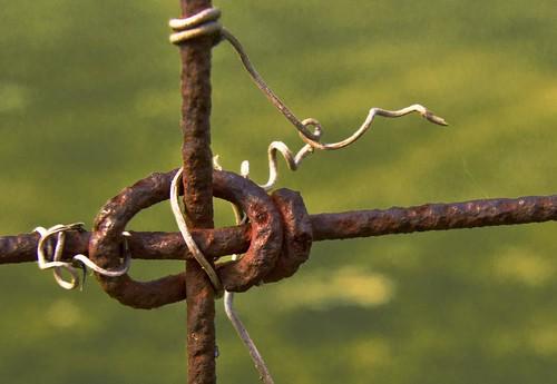 wire vine twist twisted grapevine wirefence macromondays ourdailychallenge