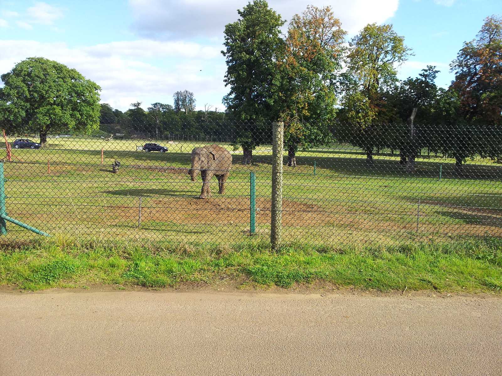 2012-09-29 16.06.09 Elephant