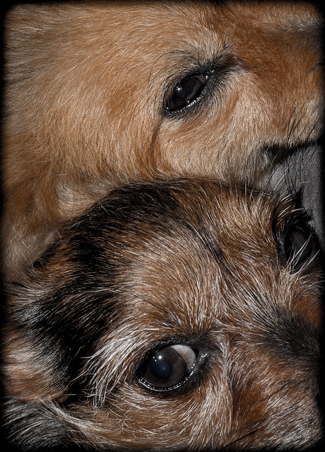 Our eyes, Boo and Beanz.