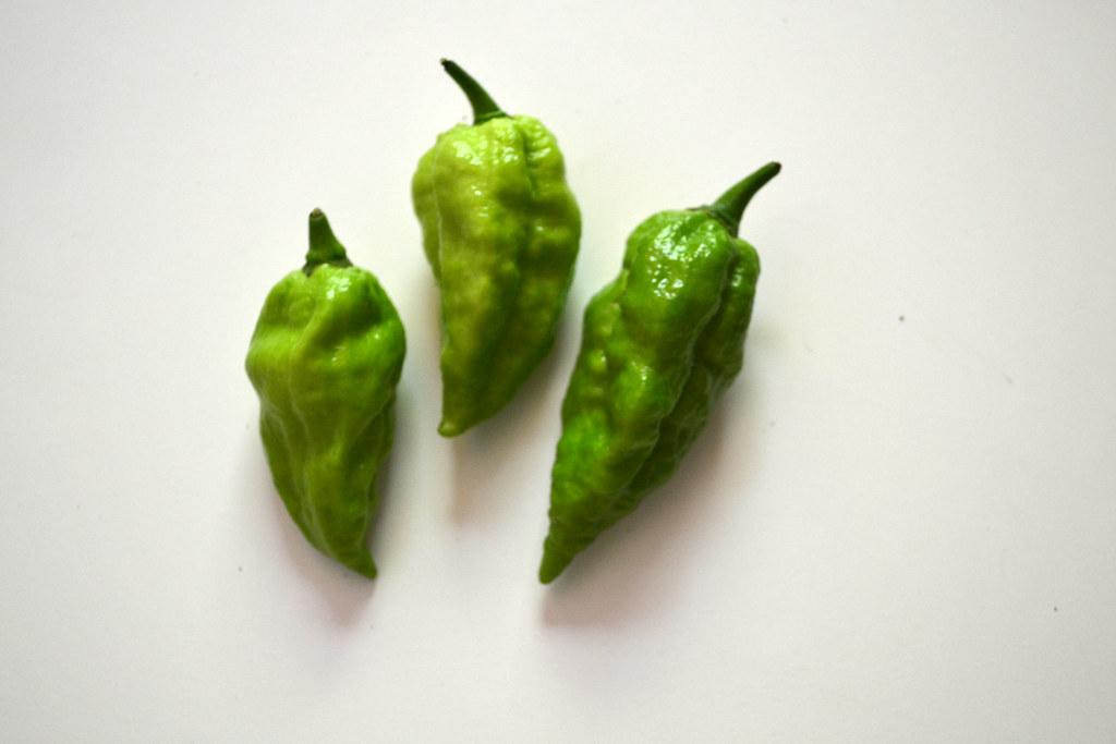 Growing Chile Peppers Indoors - Brooklyn Botanic Garden