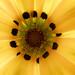 El interior de la flor