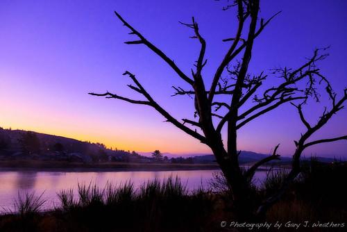 tree oregon sunrise garyjweathers