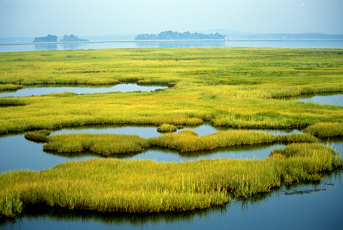 Photo of the Week - Coastal Wetlands (MA) | by U. S. Fish and Wildlife Service - Northeast Region
