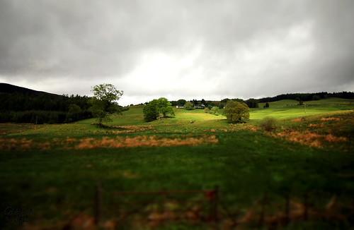 inverary scotland scotlandlandscape fields green sunlight trees landscape tiltshift vignette gimp throughthewindow bustours highlandheritage uk colour may 2016 holiday grassland canon60d canon canonwideanglelens 1018mm 10mm cloud sky field fence gate blur glenda glendahall canon1018mm