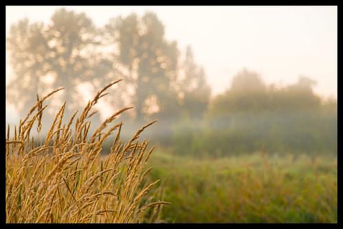 park trees summer fog bokeh outdoor september depthoffield redmond 2012 marymoor lightroom ef24105mmf4lisusm topazadjust topazdenoise canoneos5dmarkiii