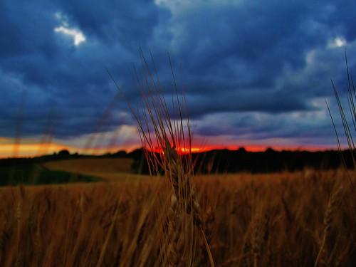 sunset minnesota clouds focus wheat