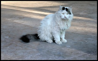 Chinese cat wears a forlorn look | by Nagarjun