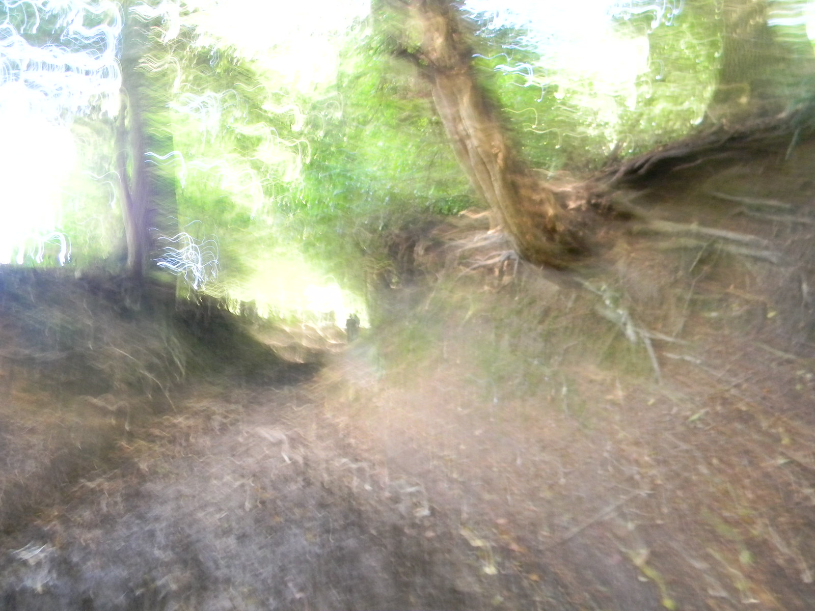 """Holloway My camera was having an """"impressionist"""" day. Haslemere Circular"""